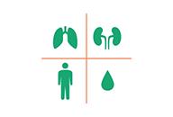 呼吸器、腎臓、膠原病<br>血液の専門病棟